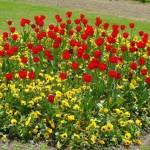 Blumen für die Liebste